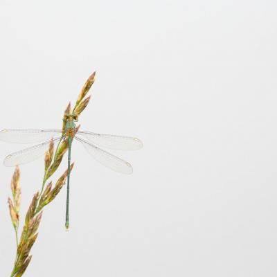 Le séchage des ailes