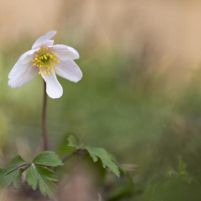 Autour d'une fleur