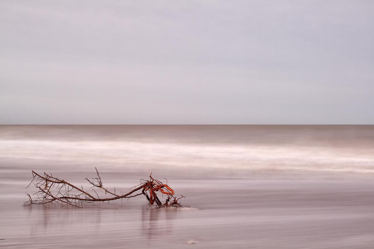 Le bois de la mer