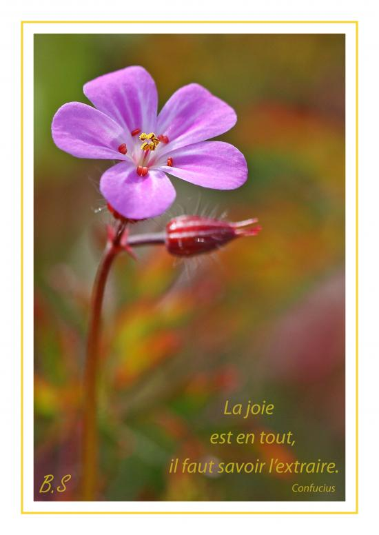 sagesse chinoise (5)