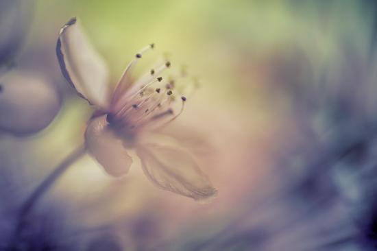 Douceur de printemps 5 5 7