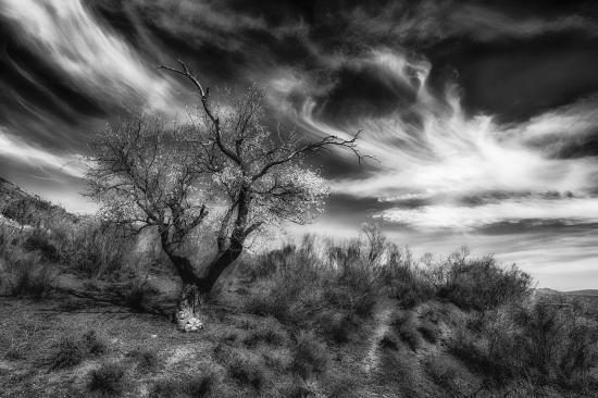 La danse de l arbre