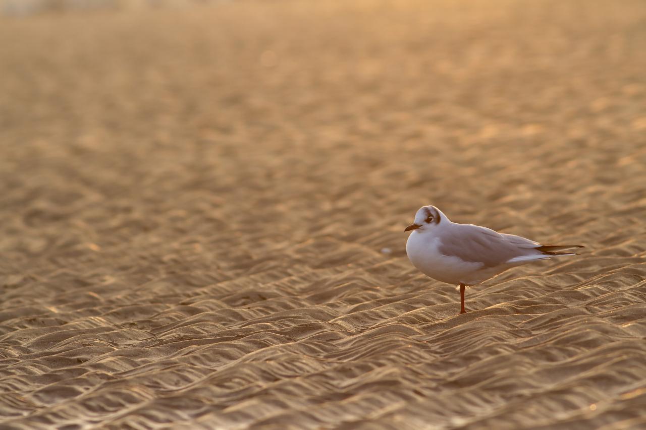 Sur du sable d'Or
