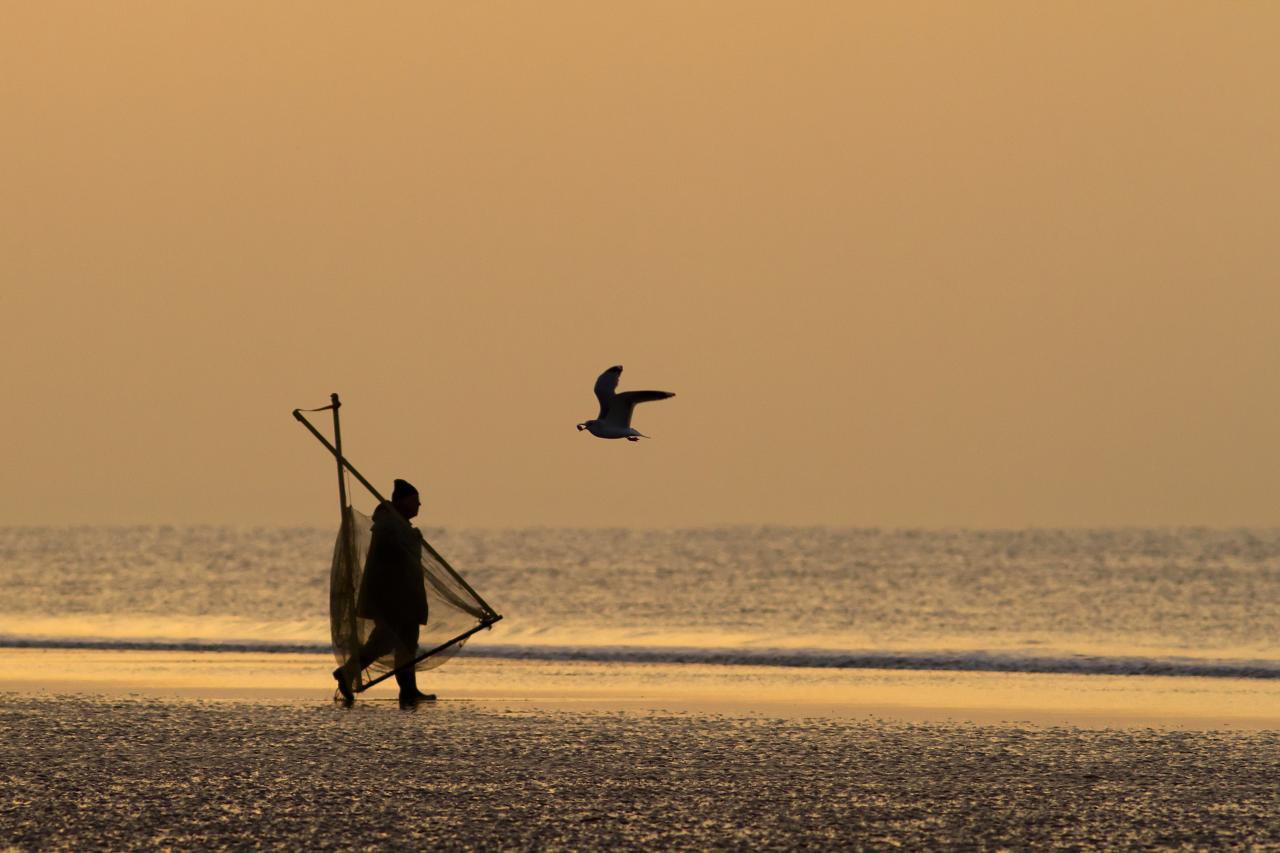 le pêcheur et la mouette