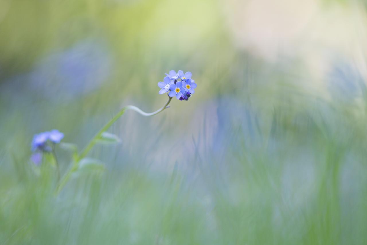 Bleu douceur