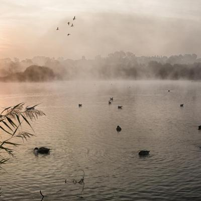 Dans la brume matinale