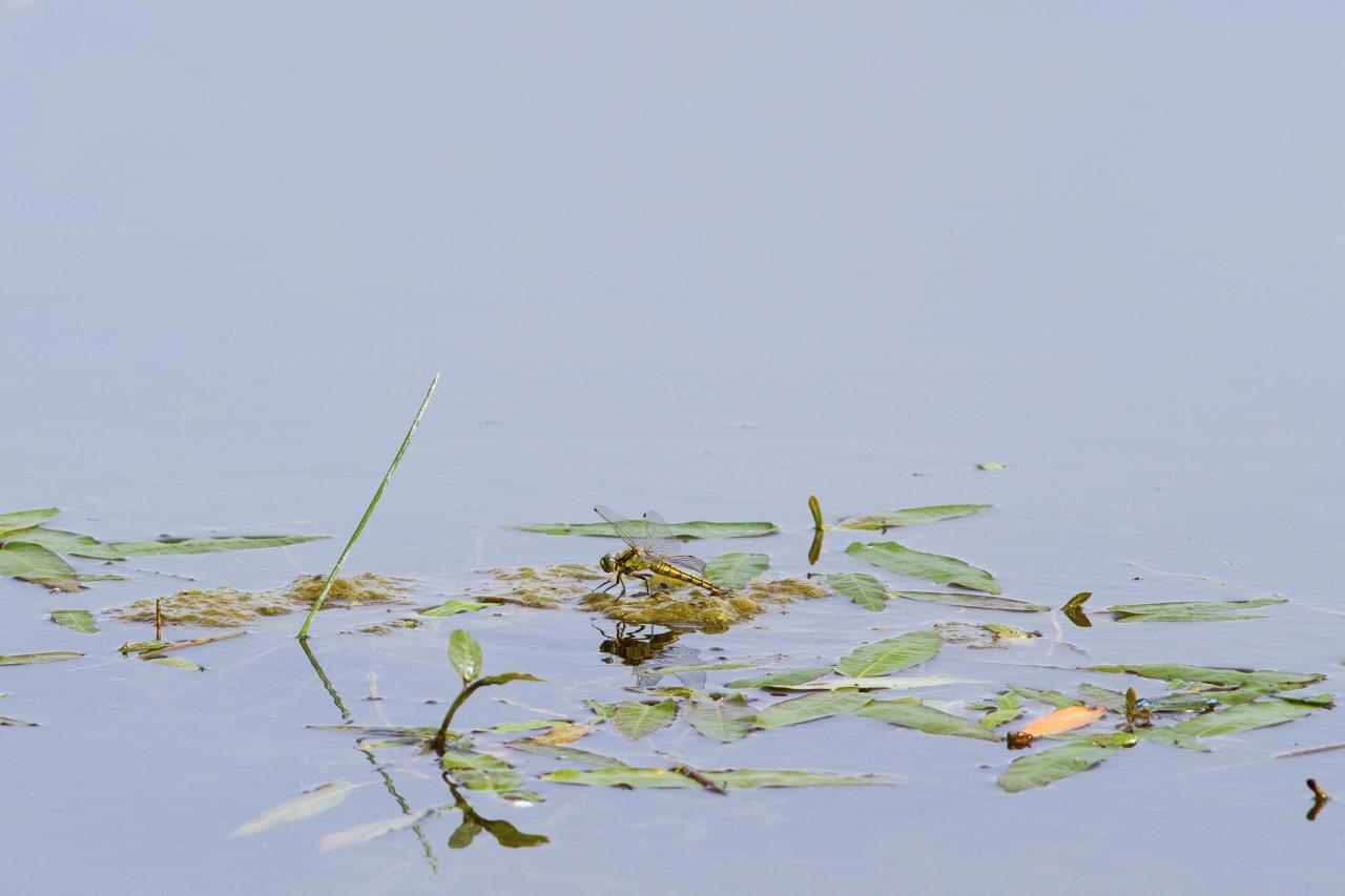 Petite scène aquatique 1