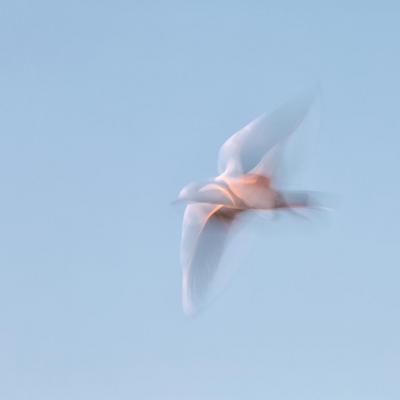 Sur les ailes du  rêve